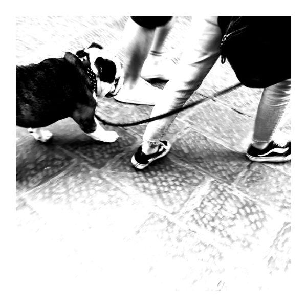 photo carrelage chien